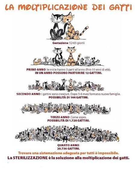 Sterilizzare-gatti