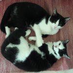 Max e Fufy
